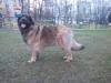 Arlin_23042017