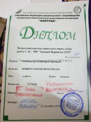 Donatello_20181202_Zimnyi_Vernisazh