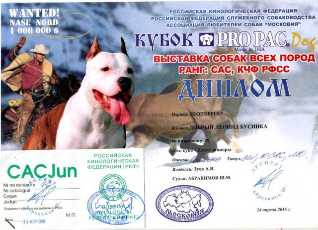 businka-diploma-24042016-1