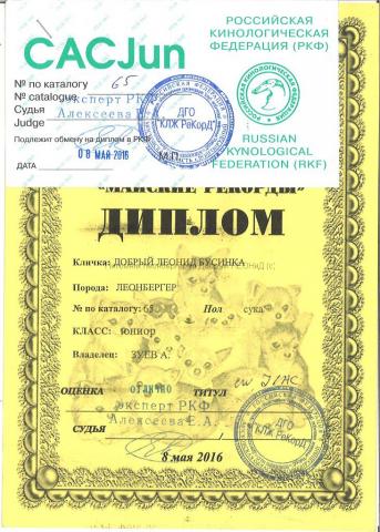 businka_diploma_08052016_1