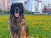 Arakhis_052019