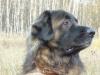 odin_2011-10-30