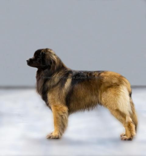 Donatello_our_dogs