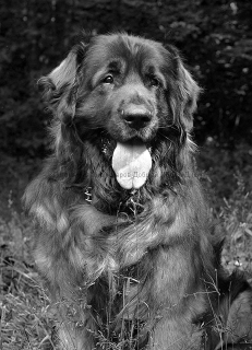 Odin, Rest In Peace our lovely friend...
