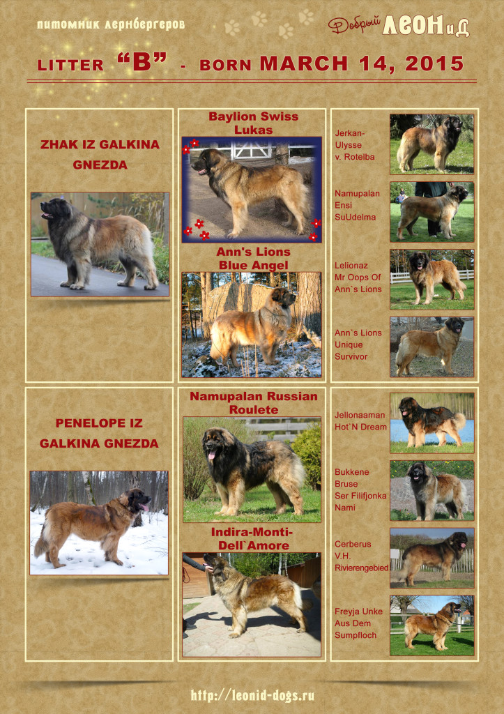 LitterB_Pedigree_Poster